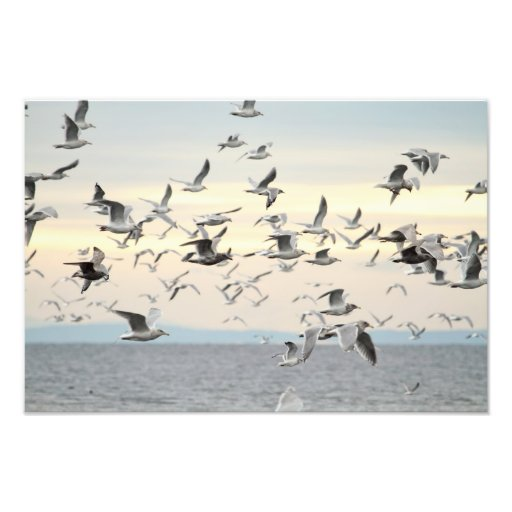 Flock of Seagulls Photo