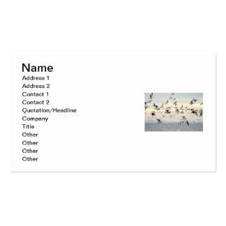 Flock of Seagulls Photo Business Card Templates