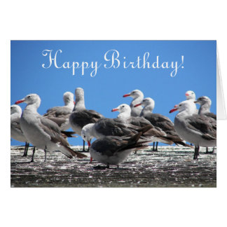 Flock of Seagulls Photo From All Birthday Card