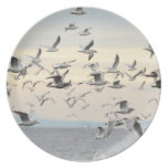Flock of Seagulls Photo Party Plate