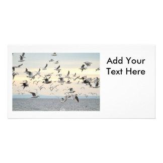 Flock of Seagulls Photo Photo Greeting Card