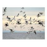 Flock of Seagulls Photo Post Card