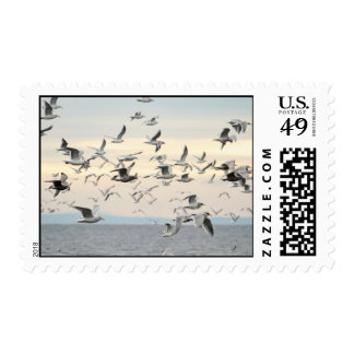Flock of Seagulls Photo Postage Stamps
