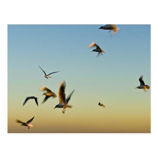 Flock of Seagulls Postcard