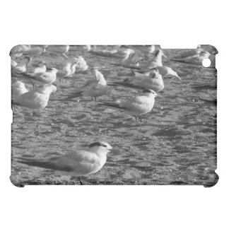 Flock of seagulls standing on florida beach case for the iPad mini