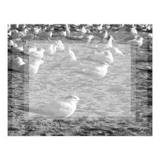 Flock of seagulls standing on florida beach letterhead