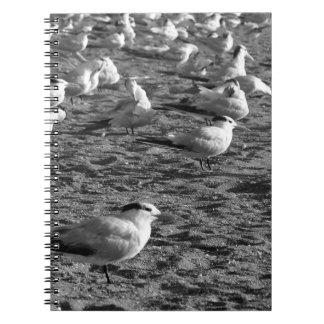 Flock of seagulls standing on florida beach notebook