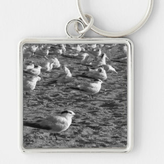 Flock of seagulls standing on florida beach Silver-Colored square keychain