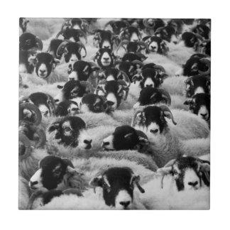 Flock of Sheep Black and White Ceramic Tile