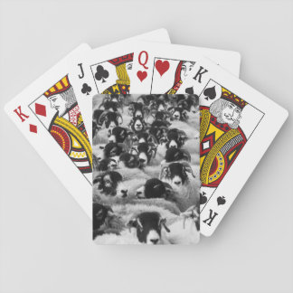 Flock of Sheep Black and White Playing Cards