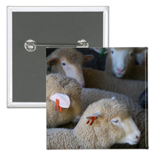 Flock of Sheep Button