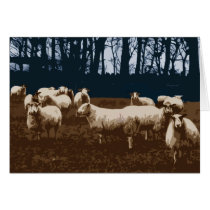Flock of sheep card