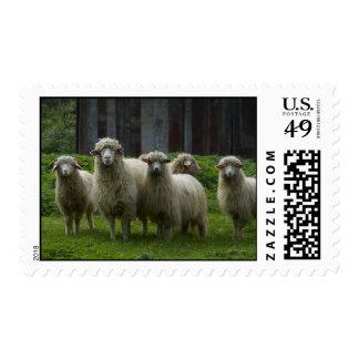 Flock of Sheep   Farm Animals Stamp