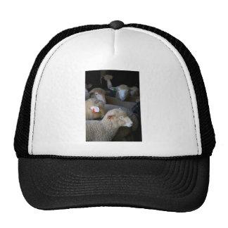 Flock of Sheep Hats