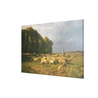 Flock of Sheep in a Landscape Canvas Print