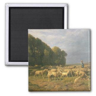 Flock of Sheep in a Landscape Magnet