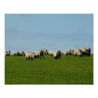 Flock of Sheep on a Hill Poster