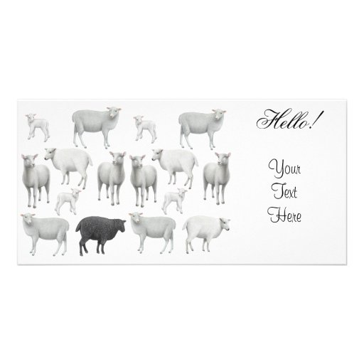 Flock of Sheep Photo Card