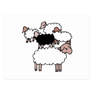 flock of sheep with black sheep postcard