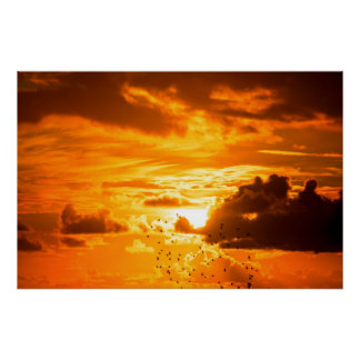 flock of starlings flying into a bright orange sun poster