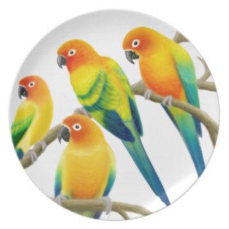 Flock of Sun Conure Parrots Plate