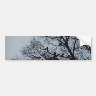 Flock of Vultures in a winter tree Car Bumper Sticker