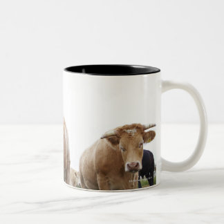 Flock of young white cows in Scottish field Two-Tone Coffee Mug