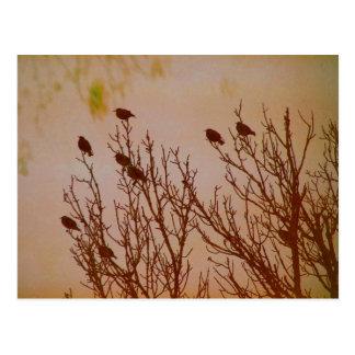 Flock Together Postcard