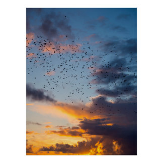 flocks of starlings flying into a bright yellow su poster