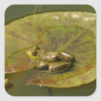 Flog on a Lily Pad Square Sticker