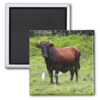 Floissac 1 2 inch square magnet