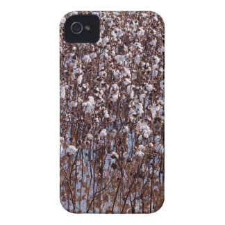Flooded Cotton Crop Field iPhone 4 Cover