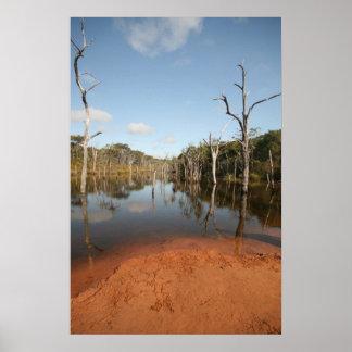Flooded Trees, Sheldon Lagoon Print