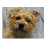 floppy eared terrier postcard