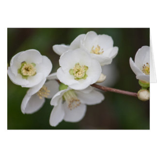 Flor #1586 tarjeta de felicitación