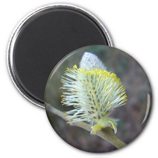 Flor 1 del árbol imán redondo 5 cm