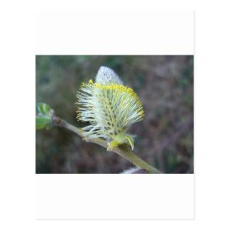 Flor 1 del árbol postales