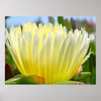flor 3 de la planta de hielo póster