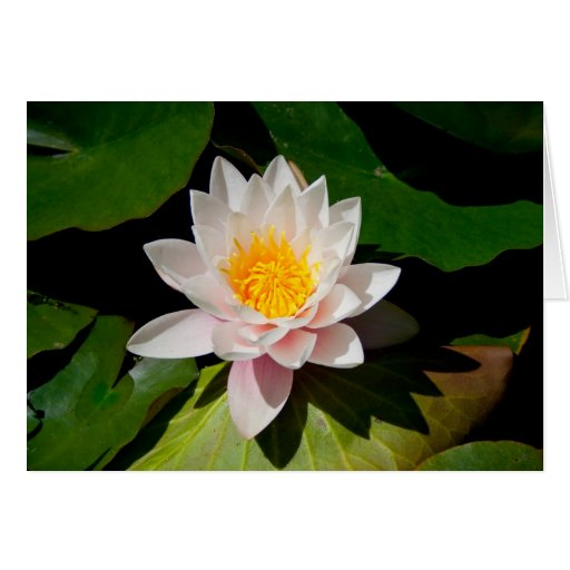 Flor #4486 tarjeta de felicitación