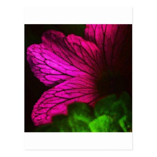 Flor abstracta tarjetas postales