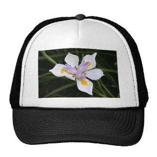Flor africana del iris en la floración gorros bordados