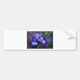 Flor alto púrpura y azul del iris barbudo pegatina de parachoque
