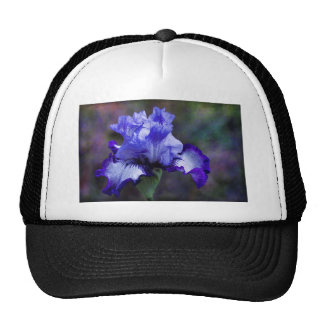 Flor alto púrpura y azul del iris barbudo gorro