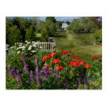 Flor - amapola - pedazo de cielo tarjetas postales