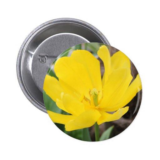 flor amarilla bonita del tulipán. jardín floral de pin redondo 5 cm