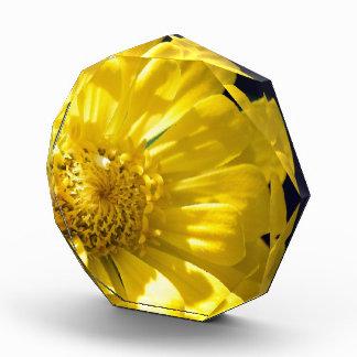 Flor amarilla brillante (regalo)
