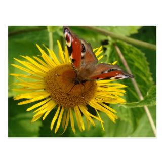 Flor amarilla con mariposa