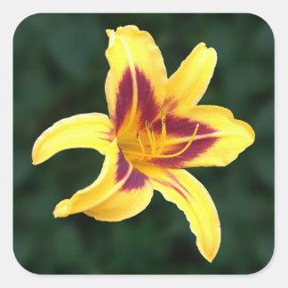 Flor amarilla con rojo Hemerocallis del Daylily Calcomania Cuadradas