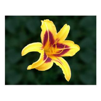 Flor amarilla con rojo, Hemerocallis del Daylily: Tarjetas Postales