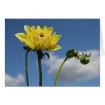Flor amarilla de la dalia en el sol felicitación
